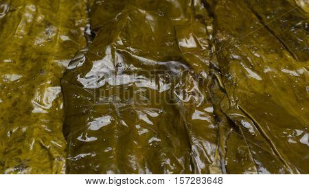 Big wet kelp leaves are used to wrap and a healthy lifestyle