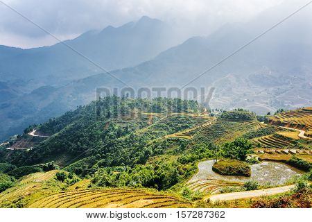 Scenic View Of Rice Terraces Filled With Water, Vietnam