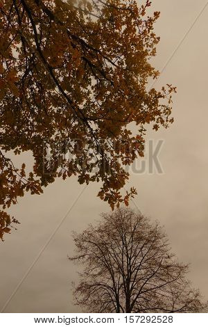 It is bad weather in autumn. The trees are looking interesting.