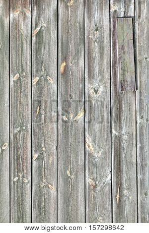 Barn Wood Old Wall Texture. Shabby Grey Wooden Vertical Background