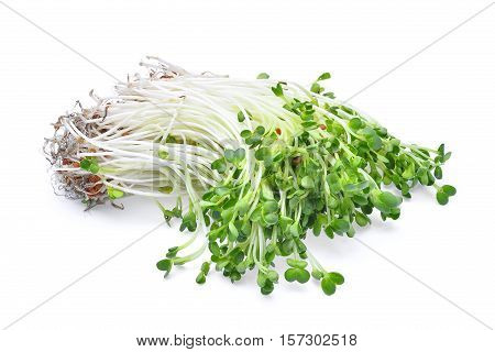 heap of alfalfa sprouts isolated on white background