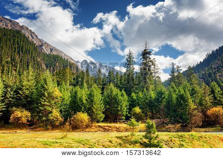 Scenic View Of Primeval Forest Among Snow-capped Mountains