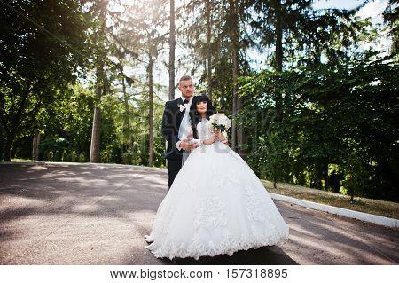 Cool Wedding Couple Background Pine Trees Wood On Sunshine.
