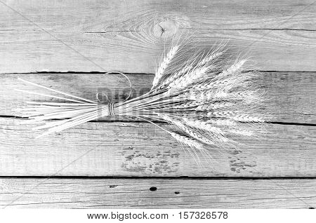Ears of wheat and oats on old rustic wooden background bright background ears of wheat, oats, splits on the table, black and white photo, space for text