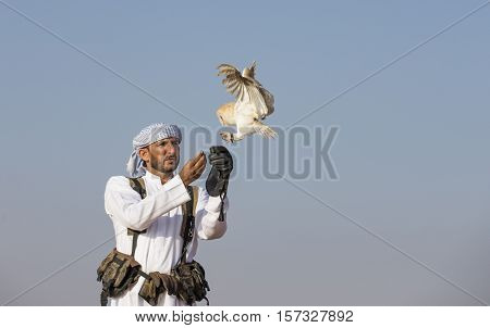 Dubai UAE November 19th 2016: A falconer in traditional outfit training a Barn Owl (Tyto alba)