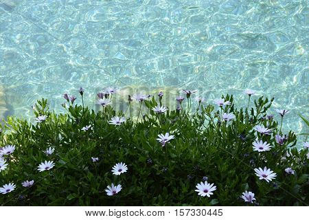Small flowers near clean water of pool