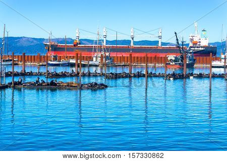 Sea lions and fishing boats in Astoria Oregon