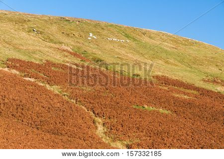 Last evening sunlight on British hill. Gospel Pass in the Black Mountains near Hay on Wye Powys Wales United Kingdom Europe.