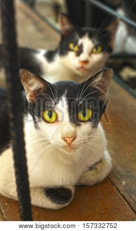 stray thai cats two lay o the wooden floor close up photo
