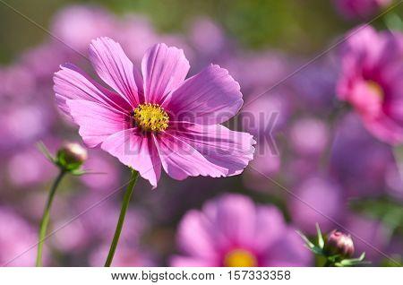 Beautiful autumn flower close up outdoor sunlight