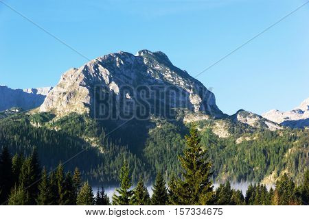 mountain landscape in Montenegro. on the slopes of pine forests grow.