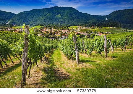 Slovenske Konjice Slovenija from nearby hill Zlati gric famous for it's vinery and vineyards town depicted through vines old castle top left