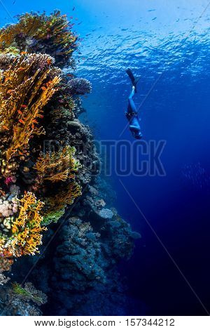 Freediver descending along the vivid reef wall. Red Sea, Egypt