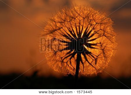 Isle Royal Dandelion Sunset