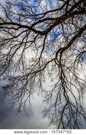 Beautiful tree in Fredericton, New Brunswick, Maritimes, Canada