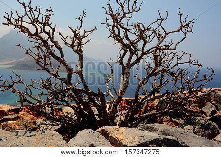 Gramvousa island, Crete! Thorny bush!  Beautiful Crete!
