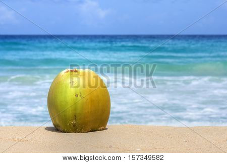 Ripe yellow coconut with husk sits on sand with turquoise blue Caribbean Sea in background under sunny sky