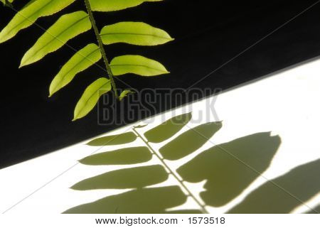 Leaves Shadow