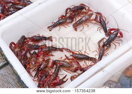 Brotherhood Of Crawfish Or Red Lobster Claws In Market