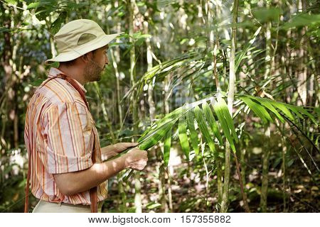 Male Botanist In Striped Shirt Standing In Front Of Green Exotic Plant, Holding Its Big Leaves And S