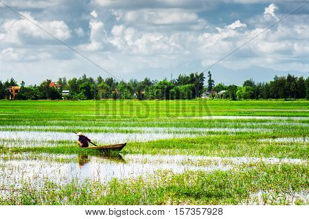 Rower Wearing Vietnamese Conical Hat Among Green Rice Fields