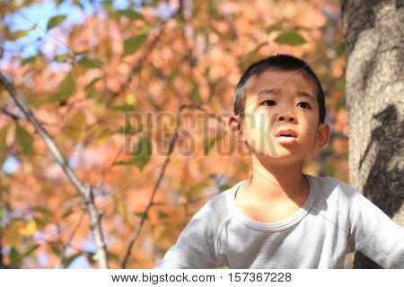 Japanese boy climbing the tree (first grade at elementary school)