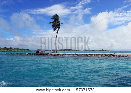 Lone coconut tree on a small Island swaying against strong winds