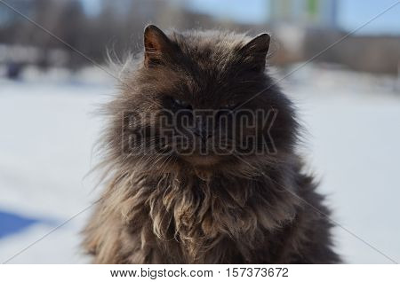 Arrogant cat looking like you are nothing