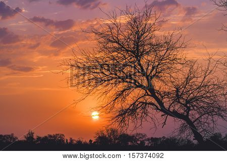 sunset through the trees and bushes in the African savannah
