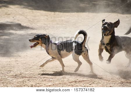 Two small dogs play with a ball on a dusty playground in the park