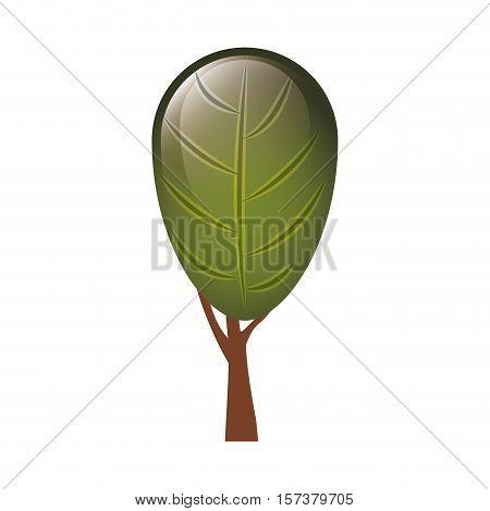 colorful tree with foliage shape leaf ovoid vector illustration