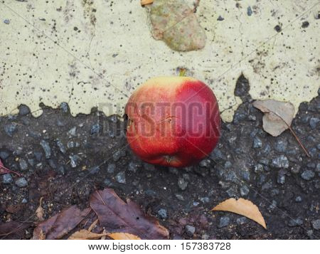 Rotten Red apple (Malus domestica) fruit vegetarian food on the tarmac