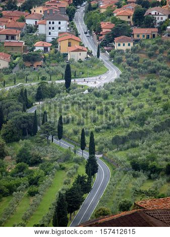 typical Tuscan landscape with olive groves and cypress trees