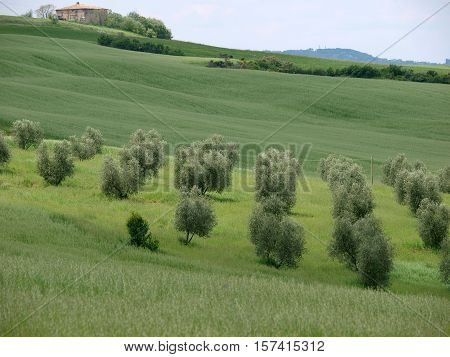 The landscape of the Val d'Orcia. Tuscany. Italy