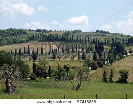 The hills surrounding Abbey of Sant'Antimo in Tuscany, Italy