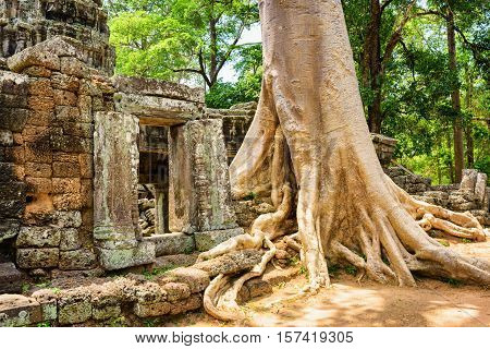 Tree Growing Among Ruins Of Ta Prohm Temple In Angkor, Cambodia
