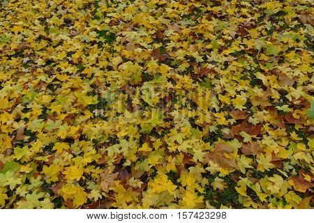 It is autumn and the leaves look like a carpet.