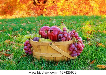 Autumn still life with fruits in a wicker basket In the basket of apples pears grapes golden autumn