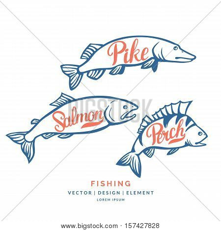 Modern hand drawn lettering word Perch salmon and pike. Calligraphy brush and ink. Vector illustration Fish