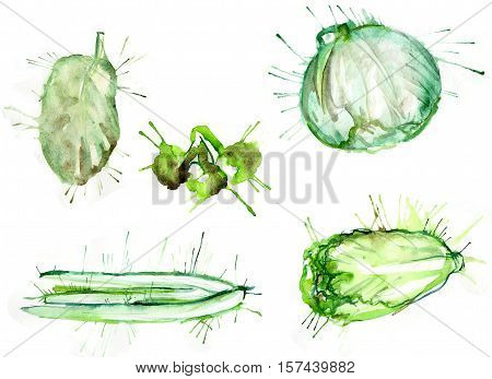 watercolor set of vegetables broccoli, cabbage, asparagus