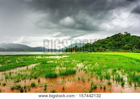 The Lak Lake And Green Rice Field, Dak Lak Province, Vietnam
