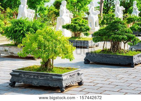 Green Bonsai Trees Growing At Courtyard Of The Linh Ung Pagoda