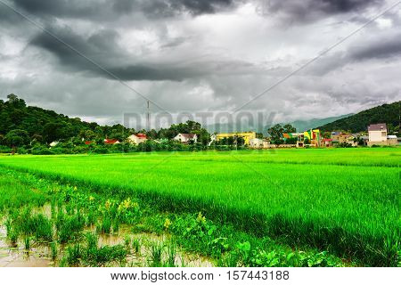 Bright Green Rice Fields At Lien Son, Dak Lak Province, Vietnam