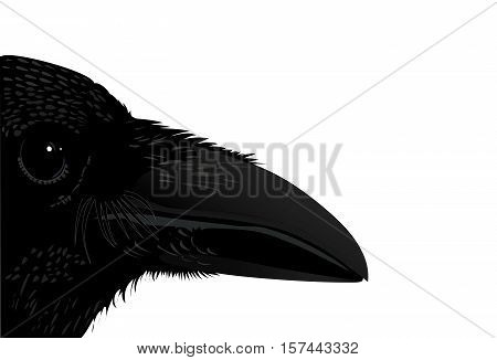 Profile raven black bird isolated vector illustration