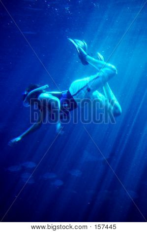 Diving With Sharks #2