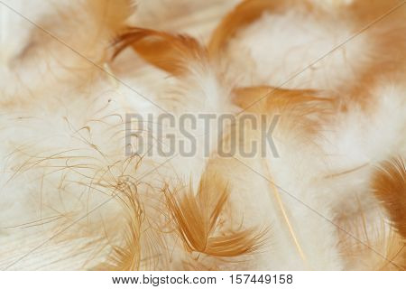 Downy background made from chicken feathers. Detail of chicken feathers on the beige wooden background.