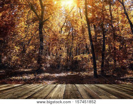 a wooden podium in autumn park