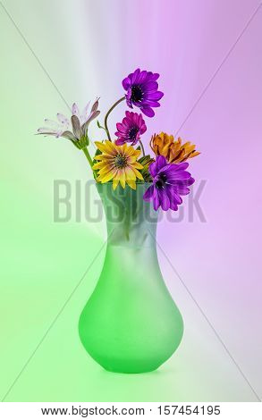 Multi coloured flowers in a vase on a diffused background
