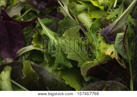 Close Up Of Green Salad Arugula