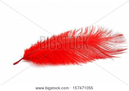 color feather object on a white background